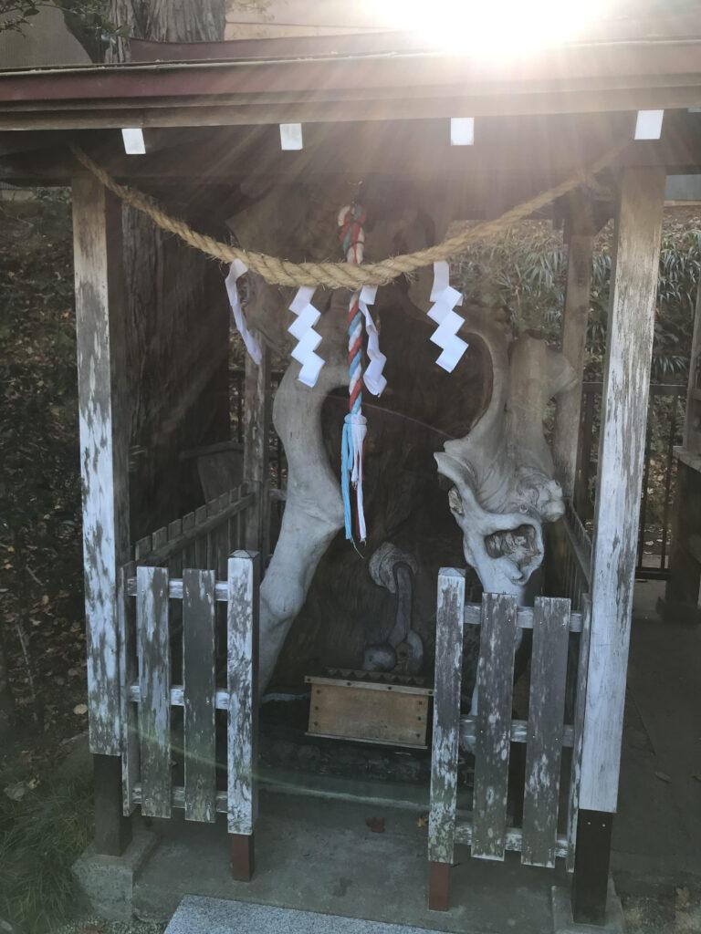 金蛇水神社の御神木