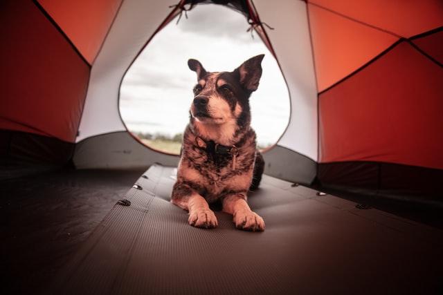 犬用テント